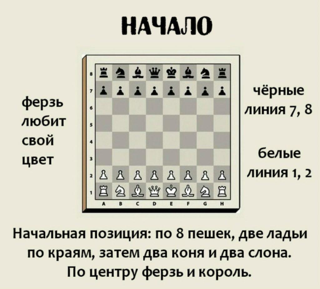 шахматы правила для начинающих