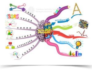 Развитие межполушарных связей